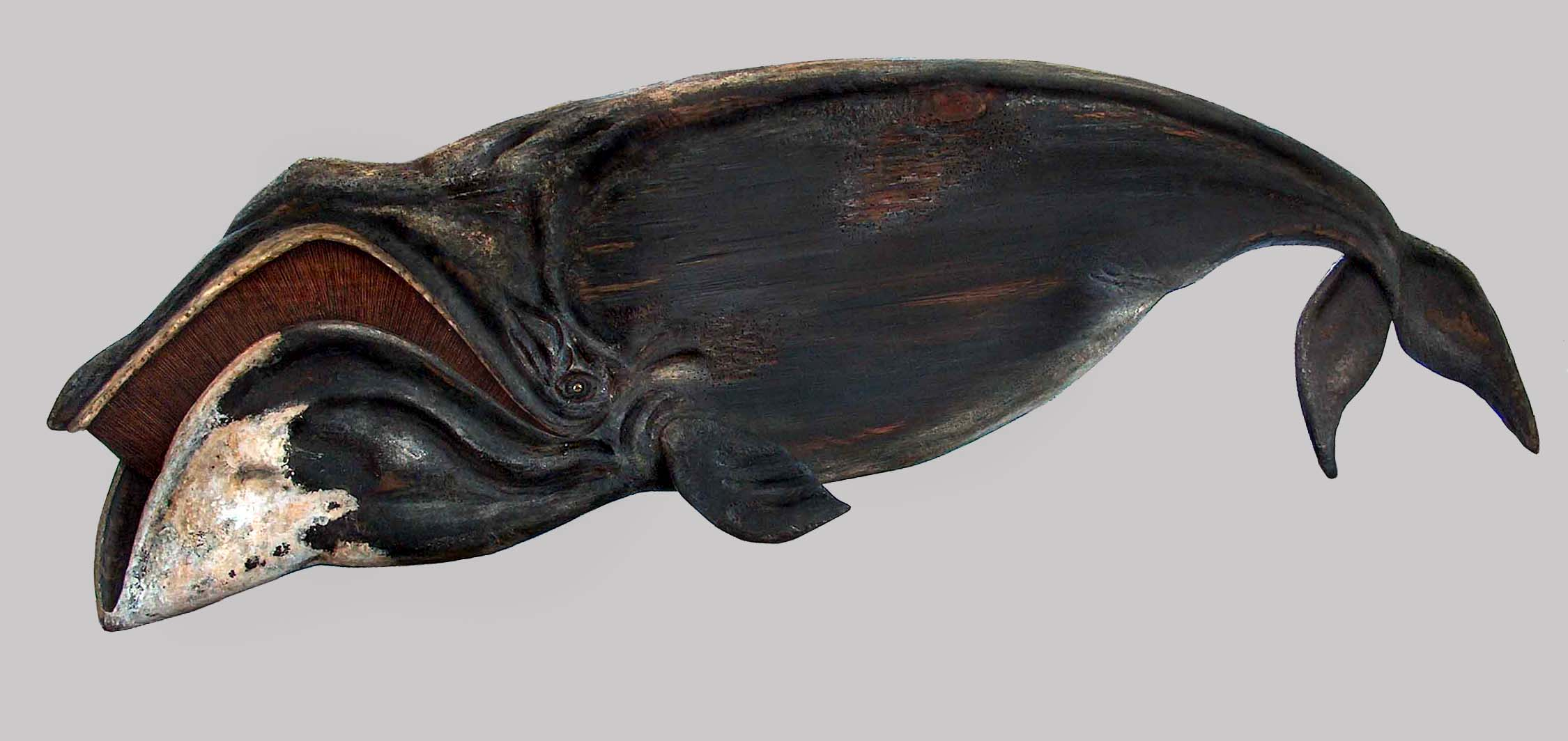 The mouth of the Bowhead Whale is shaped as an archer's bow
