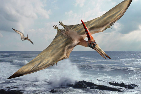 An image showing Pteranodon feeding