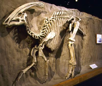 The Parasaurolophus was found in Alberta