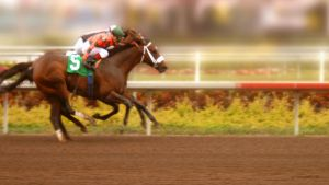 Thoroughbreds are used in horse racing
