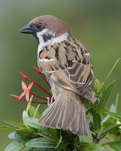 This bird can be found all over Eurasia