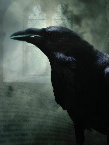 The Common Raven is found all over the Northern Hemisphere