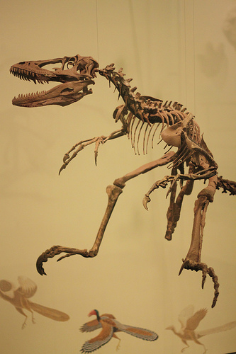 The skeleton of the Deinonychus
