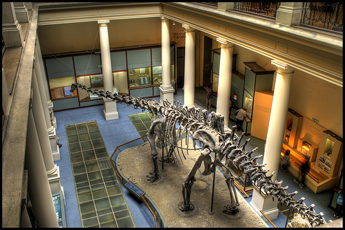 The Diplodocus was formerly the longest dinosaur ever known