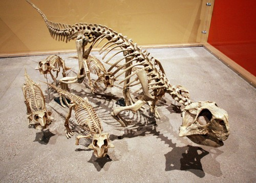 A family of Psittacosaurus