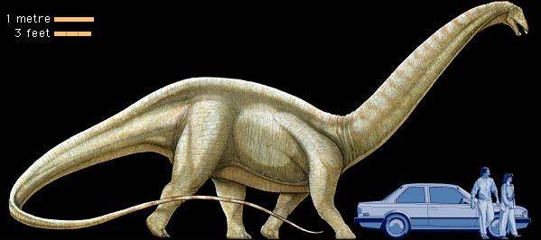 The size of the Brontosaurus, compared to a human and a car