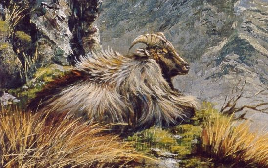 A painting of the Himalayan Tahr