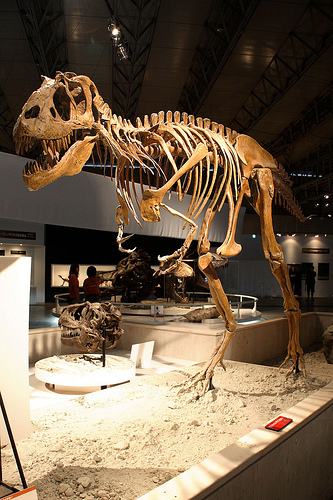 The Gorgosaurus skeleton