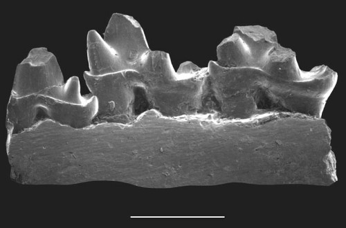 The lower jaw fragment unearthed