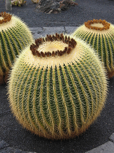'Walking cactus' roamed the earth in ancient times (not real plant cactus as depicted)
