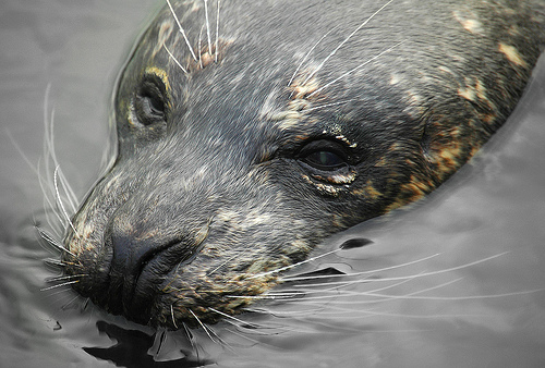UK seals need help!